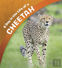 A Day In The Life Of A Cheetah