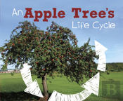 An Apple Tree'S Life Cycle