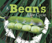 Beans Life Cycle