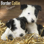 Border Collie Puppies Calendar 2019