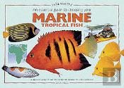 Essential Guide To Choosing Your Marine Tropical Fish