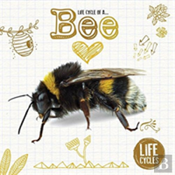 Bertrand.pt - Life Cycle Of A Honeybee