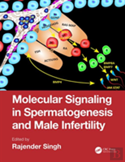 Bertrand.pt - Molecular Signaling In Spermatogenesis And Male Infertility