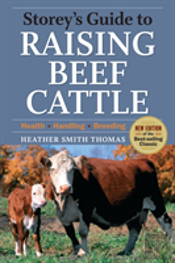 Raising Beef Cattle