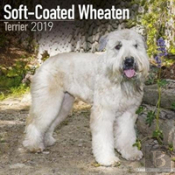 Soft Coated Wheaten Terrier Calendar 2019