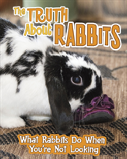 Bertrand.pt - Truth About Rabbits The