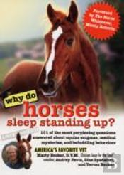 Why Do Horses Sleep Standing Up?